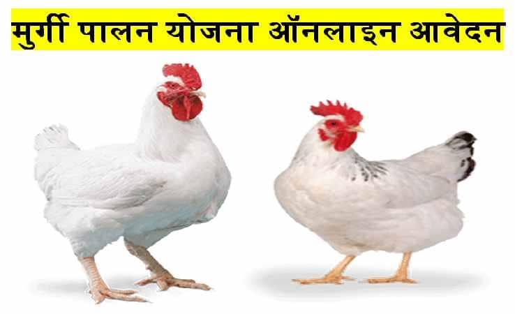 Murgi Palan Yojana | मुर्गी पालन योजना ऑनलाइन आवेदन 2021